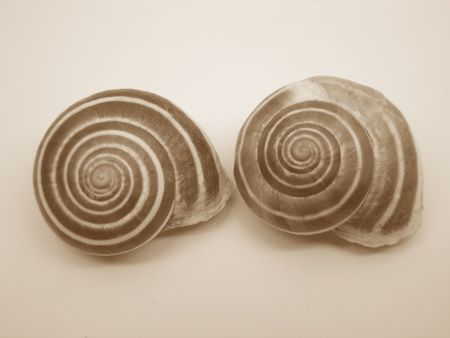 Snail Shells 스톡 콘텐츠