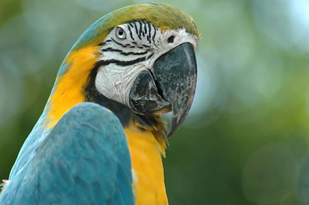 Parrot Attitude Stock Photo