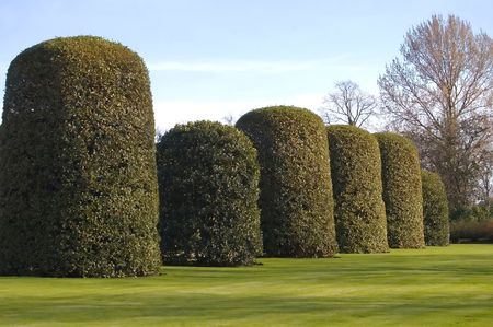 Giant konische heggen in de Orangerie, Kensington Palace, Londen, Engeland. Stockfoto - 826938