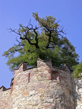 Watch tower with tree - on the walls of Prague Castle, Prague, Czech Republic. 版權商用圖片