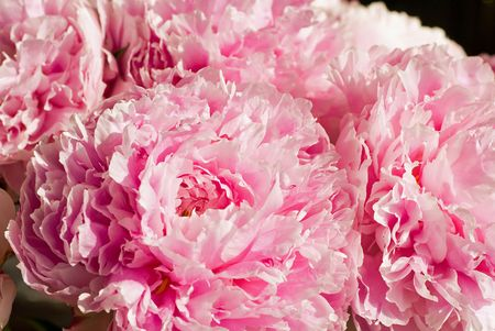 Pretty pink peonies make a lush bouquet of flowers.