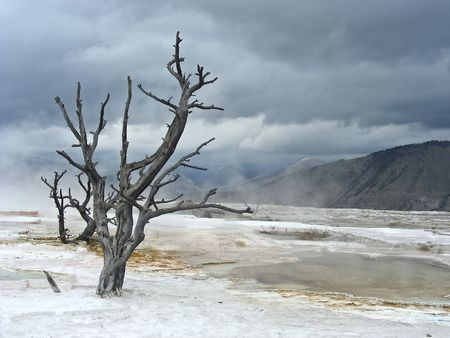 seemingly: Looking out over the seemingly devasted landscape of Mammoth Hot Springs, Yellowstone, Wyoming. Stock Photo