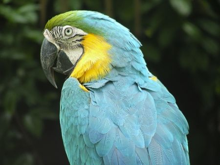 One handsome looking parrot, striking a regal pose.