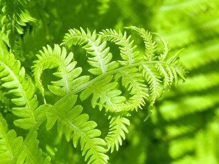 A wonderful emerald green glow from a patch of new ferns.