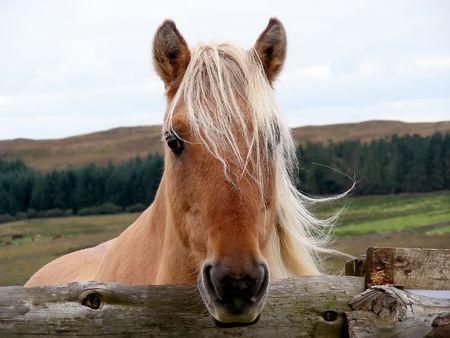 Hi - look at me, Im a pretty horse.