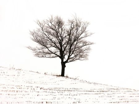 The black and white and cold of it - a bare tree on a desolate winter landscape.