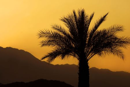 Sunset and a palm tree, Palm Springs, California. Stock Photo