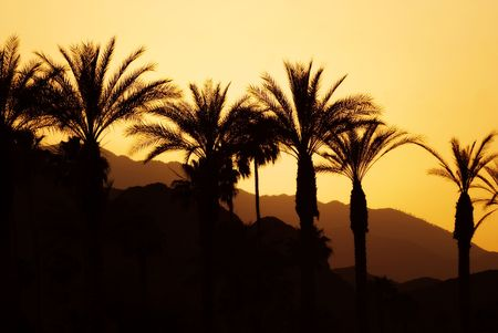 Sunset, palm trees and mountains in lovely Palm Springs, California.