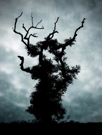 mull: Spooky looking tree on the Isle of Mull,Scotland. Stock Photo