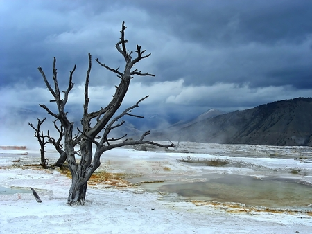 seemingly: Looking out over the seemingly devasted landscape of Mammoth Hot Springs, Yellowstone, Wyoming  Stock Photo
