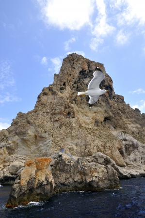 A seagull flying around a small island in the Balearics Stock Photo - 17078669