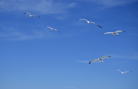 A blue sky with several pigeons, flying. Stock Photo - 17749552