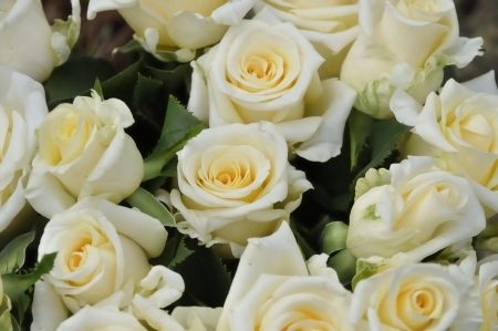 A bouquet of white roses freshly cut