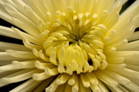 A macro to a variety of yellow flower