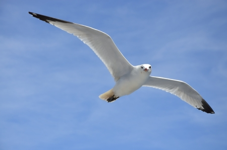 White dove in flight on blue sky Stock Photo