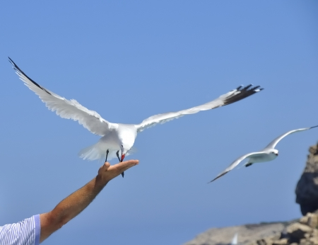 A pigeon lands in the hand of a man photo