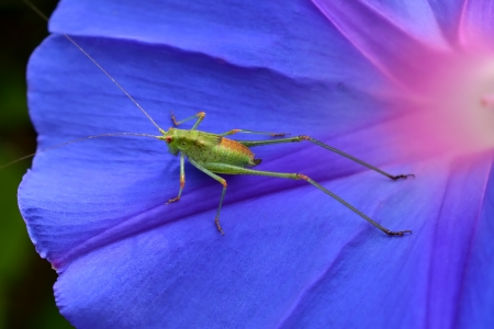 A grasshopper resting on a flower in spring Stock Photo