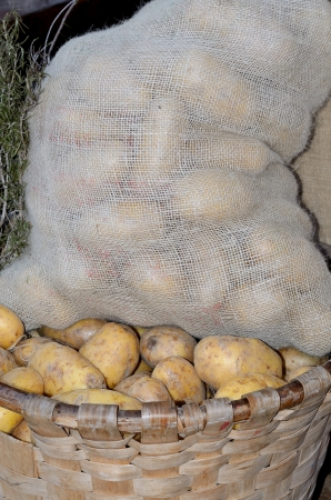 Pickup white potato baskets and bags in a farm