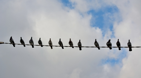 Twelve pigeons on top of a wire with blue sky and white clouds