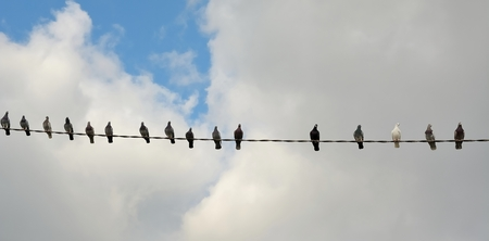 Sixteen pigeons on top of a wire with blue sky and white clouds
