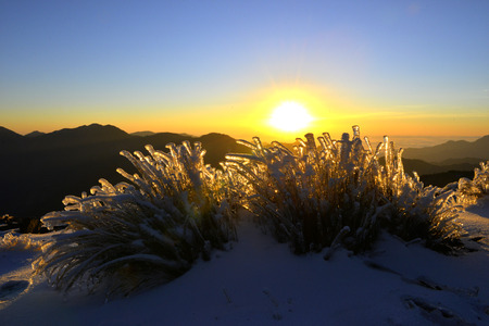 national plant: The plant of yushan national park Taiwan
