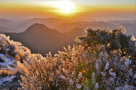 The plant of Yushan National Park Фото со стока
