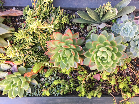 Succulents in a planter box with variety of modern plants
