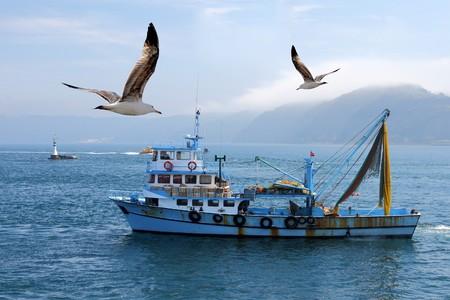 mouettes: p�che bateau sur le Bosphore, entour� de mouettes avec un phare en arri�re-plan, en Turquie