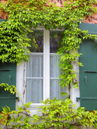 grape framed window with green window shutters photo