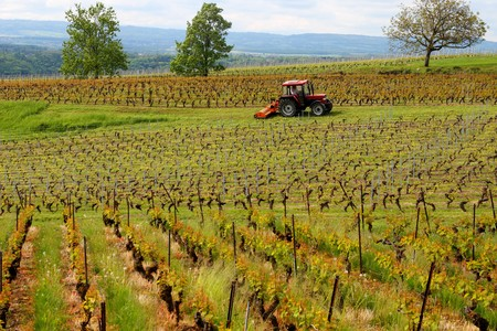 surly: vinyard with long  rows of grapes set amidst a mountainous scenery just tended by a tractor