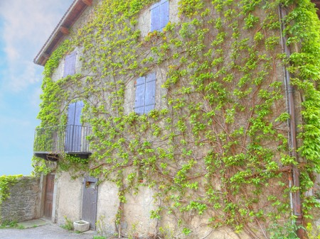 house wall overgrown by lush green vines Imagens