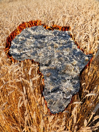 humanitarian: no hope for africa concept, burren patch  of land in the shape of africa amidst a wheat field symbolising the rich rest of the world around it