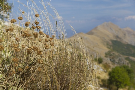 bleak: patch of dried grass and flowers on a sharp arid, bleak, mountain ridge in Montenegro