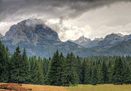 bleak: Haunted woods of National Park Durmitor with bad weather and mighty rocky peaks, Montenegro Stock Photo