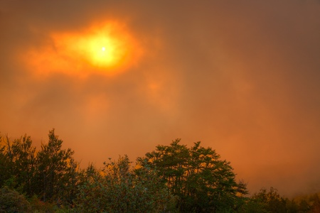 pierce: sun sets behind a group of trees in a veil of fog and turns the sky orange