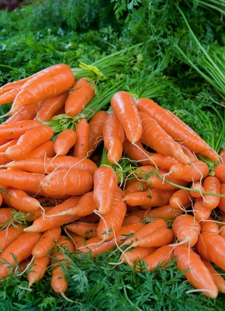 fresh healty carrots with green on sale at a farmers market photo