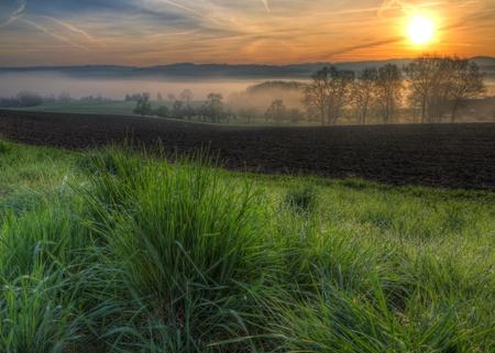 glistening: hierba brillando con Roc�o ma�ana cae al amanecer en un campo con niebla �rboles y colinas en segundo plano