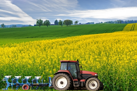agriculture machinery: tractor with plough drives along beautiful sweeping blossoming bright yellow canola fields, concept for agriculture business Stock Photo