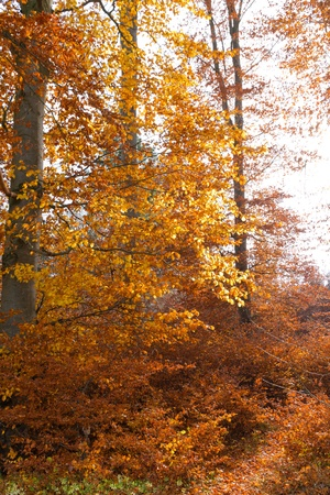 illuminated golden autumn forest Stock Photo