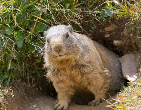 den: groundhog sitting in front of it Stock Photo
