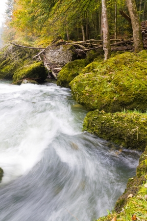 fresh  clean, clear, forest stream splash down over moss covered stones in autumn woods photo
