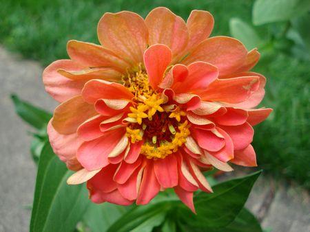 ソフトペダル花