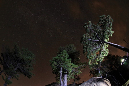 Pine trees lit flashlight tourists on the background of the starry sky.
