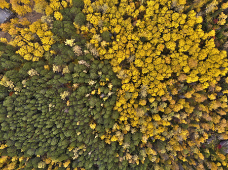 Aerial view of autumn forest in the Siberian nature reserve Stolby.