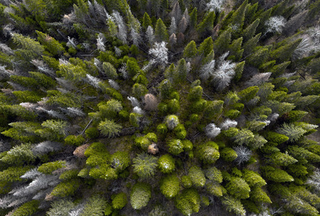 Aerial view of the coniferous autumn forest.