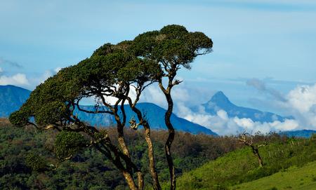 adams: Adams Peak, sacred mountain, Sri Lanka, Asia