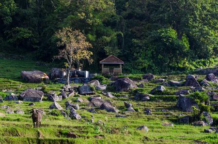agriculture sri lanka: Rural area of Sri Lanka Stock Photo