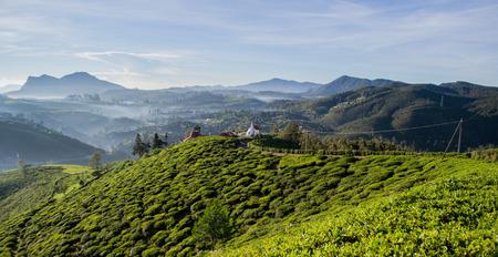 Tea Campi di Sri Lanka, Nuwara Eliya Archivio Fotografico - 68187604