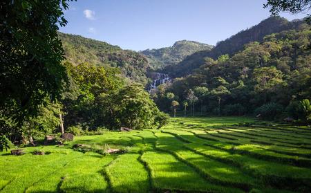 Rice Fields of knuckles mountain range, Sri Lanka.