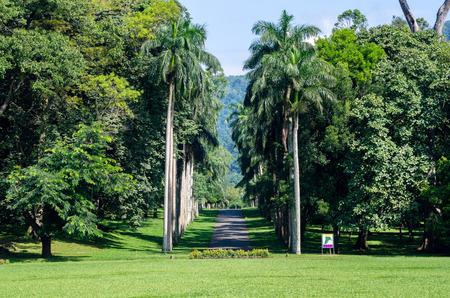 Botanical Garden of Peradeniya, Kandy or Royal Botanical Gardens